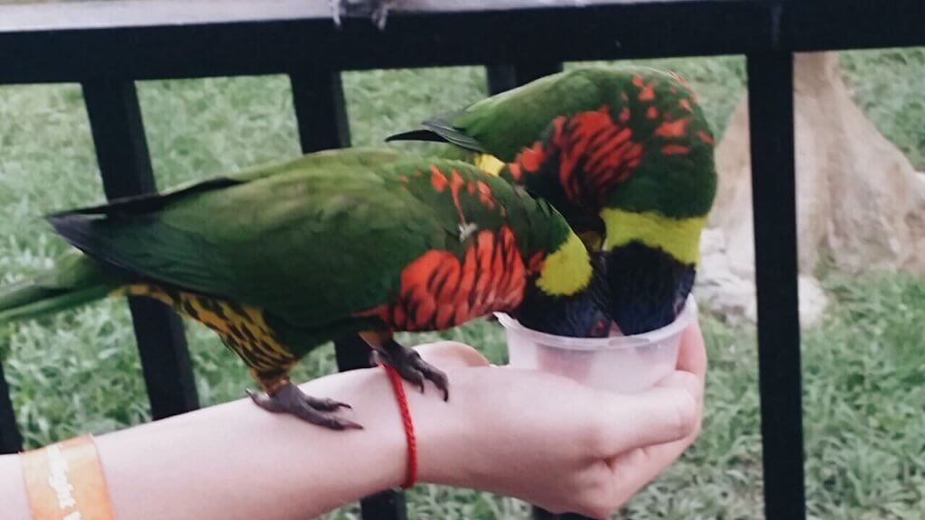 holding a bird on my hand in KL Bird park