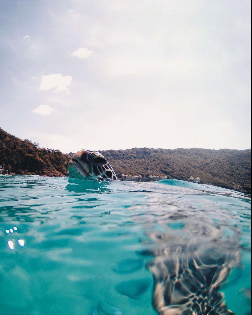 turtle on redang island - La Vie En Marine