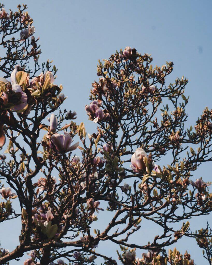 Magnolia blooming, 5 minimalist habits, La Vie En Marine