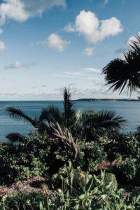 Tenby's Palms, Road Trip in South Wales - La Vie En Marine