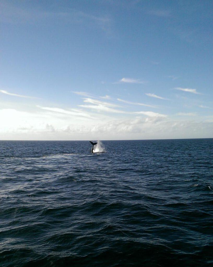 Whale Fin in Cape Cod
