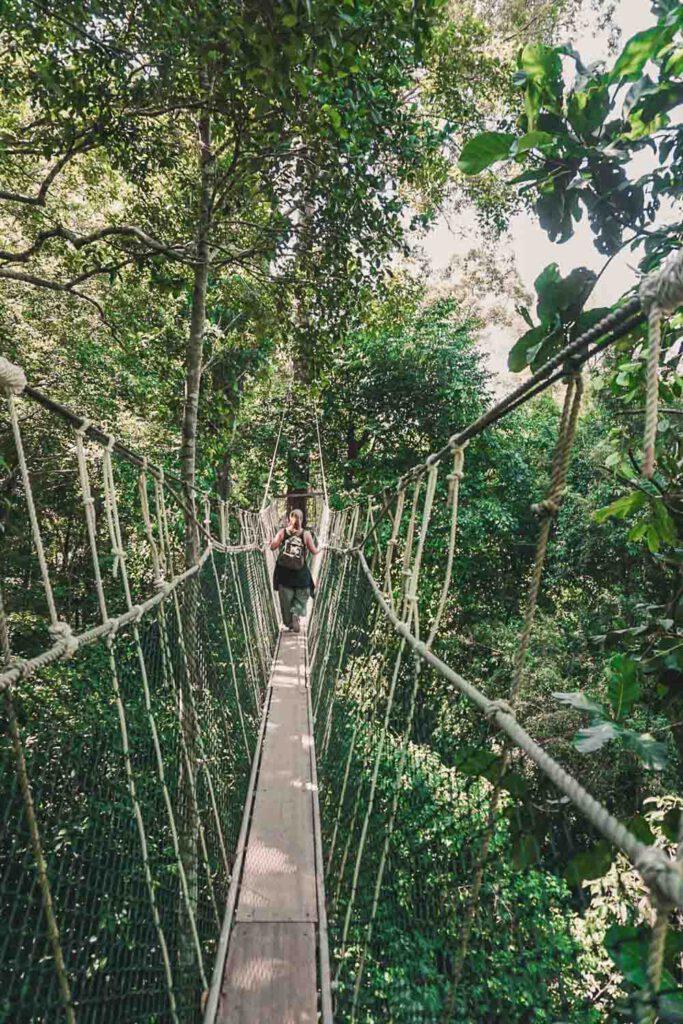 Girl walking on the Canopy Tree Top Walk in Taman Negara, Malaysia