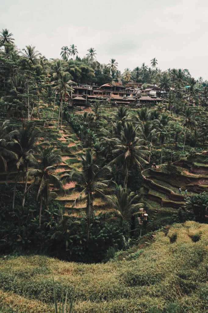 See a rice terrace